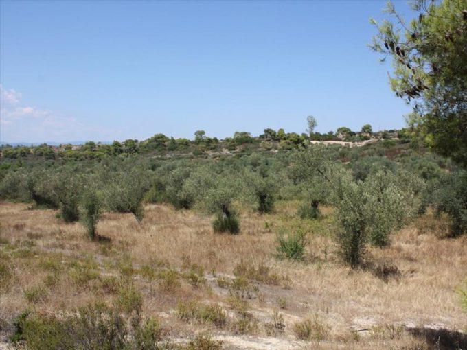 Продажа - Земельный участок 6000 кв.м, Ситония, Халкидики, Греция