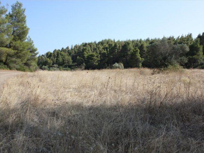 Продажа - Земельный участок 4960 кв.м, Ситония, Халкидики, Греция