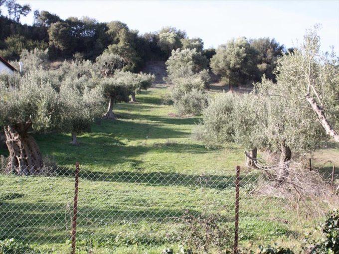 Продажа - Земельный участок 0 кв.м, Кассандра, Халкидики, Греция