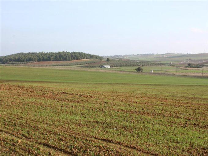 Продажа - Земельный участок 56000 кв.м, Кассандра, Халкидики, Греция