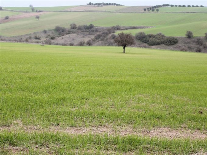 Продажа - Земельный участок 10000 кв.м, Ханья, Ханья, Греция