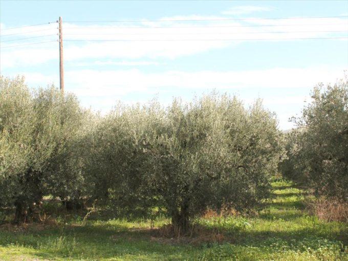 Продажа - Земельный участок 50000 кв.м, Ситония, Халкидики, Греция