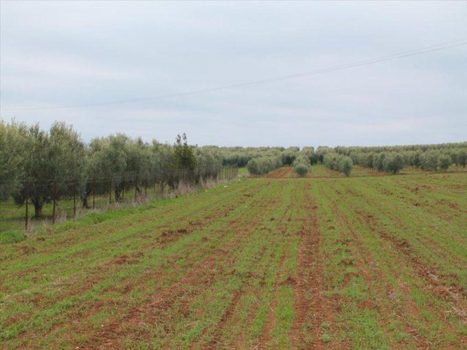 Продажа - Земельный участок 5800 кв.м, Кассандра, Халкидики, Греция