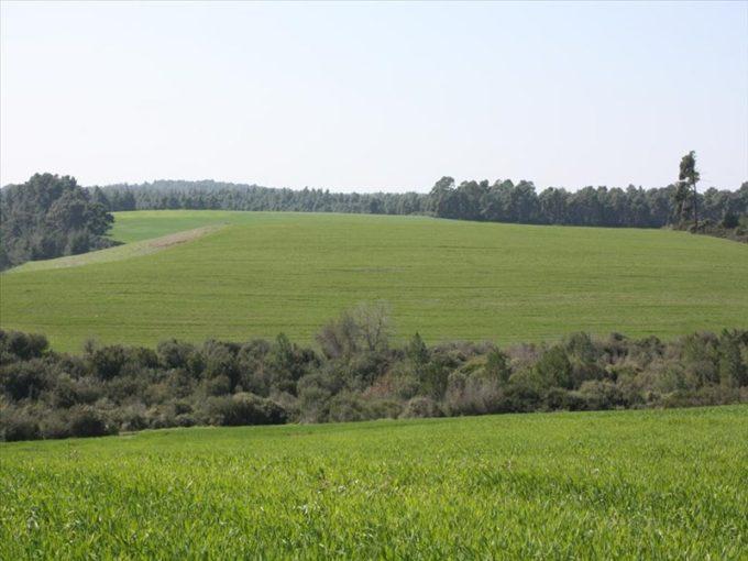 Продажа - Земельный участок 32000 кв.м, Кассандра, Халкидики, Греция