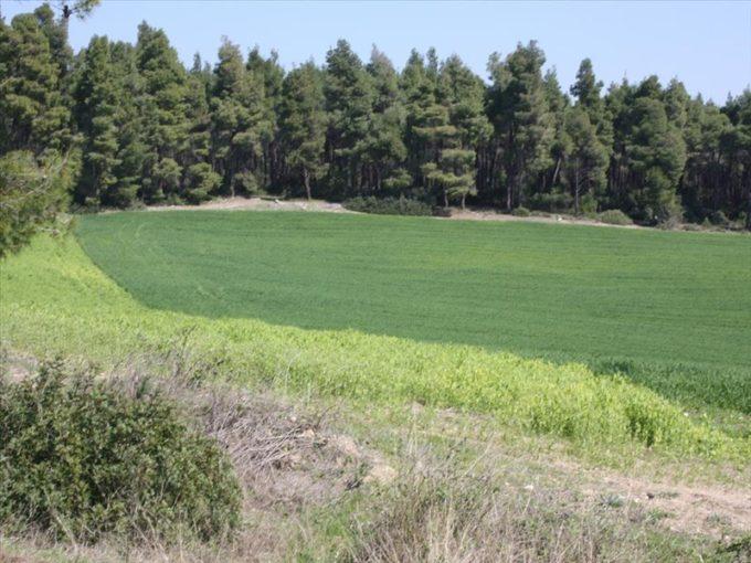 Продажа - Земельный участок 17500 кв.м, Кассандра, Халкидики, Греция