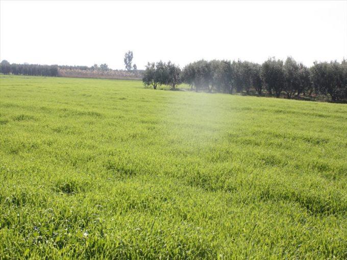 Продажа - Земельный участок 5250 кв.м, Кассандра, Халкидики, Греция