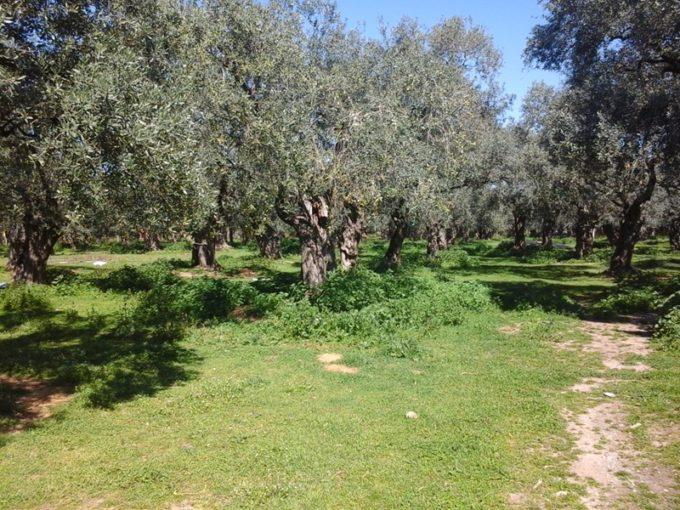 Продажа - Земельный участок 10500 кв.м, Каливес, Кавала, Греция