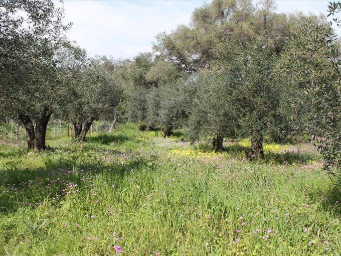 Продажа - Земельный участок 700 кв.м, Керкира, Керкира, Греция