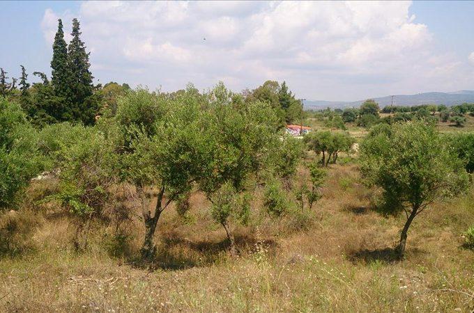 Продажа - Земельный участок 15000 кв.м, Ситония, Халкидики, Греция