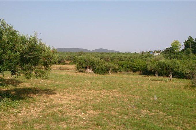Продажа - Земельный участок 4589 кв.м, Ситония, Халкидики, Греция