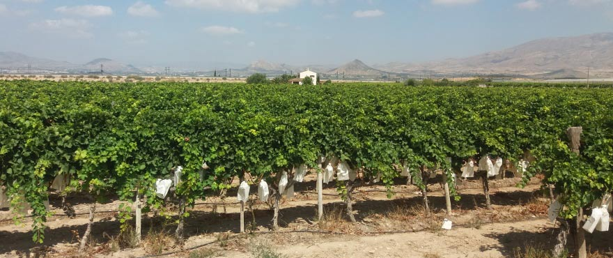 C8_Brisas_de_Alenda_wine